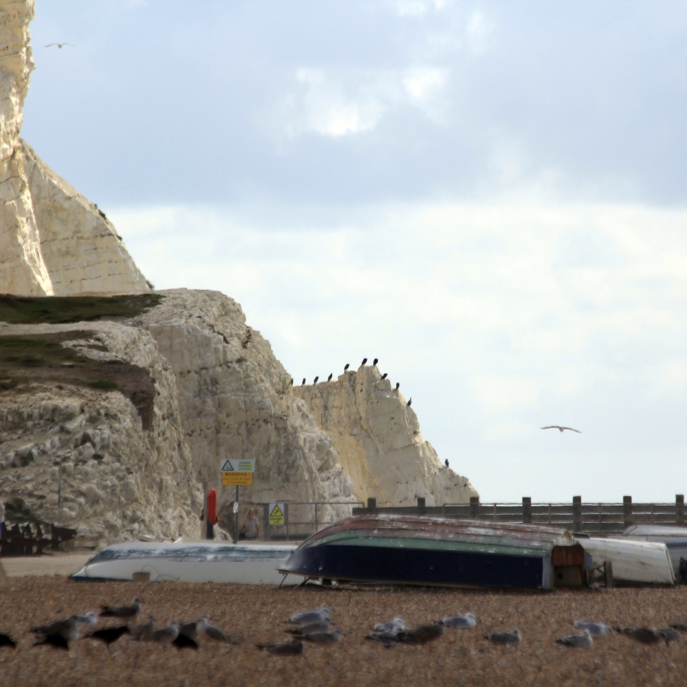 The beach at Seaford, with shags on the rocks