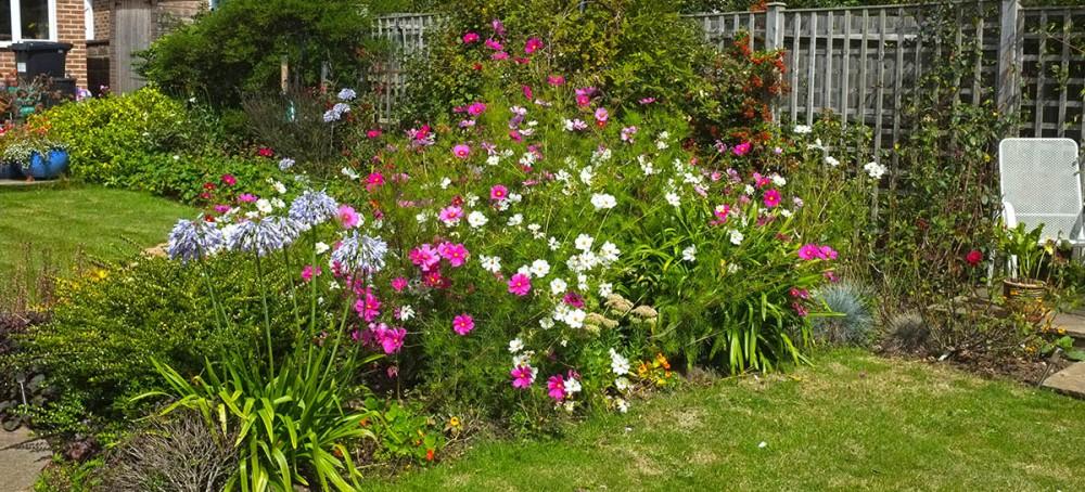 Garden DSCF3696